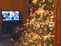 Show us your Trees! - Robertson Family Tree, Lions eliminated