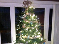 Show us your Trees! - Beneteau Family Tree